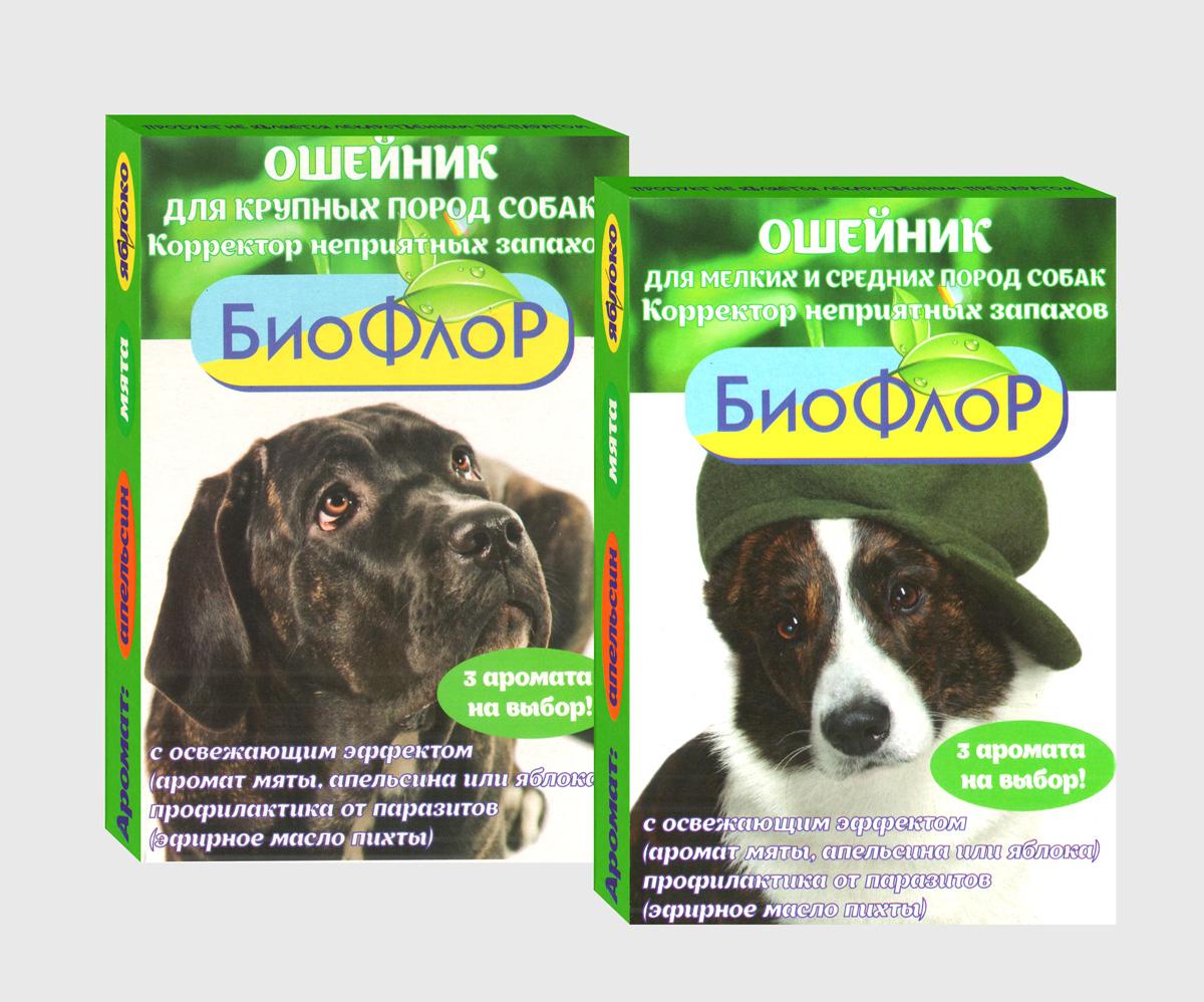 собаки без аллергии