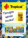 tropical0318